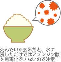 発芽しづらい玄米に注意